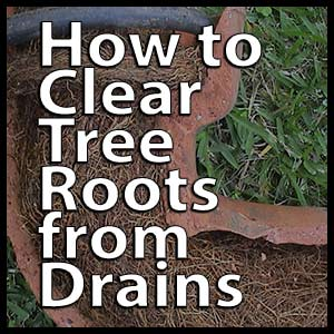 How to Clear Tree Roots from Drains