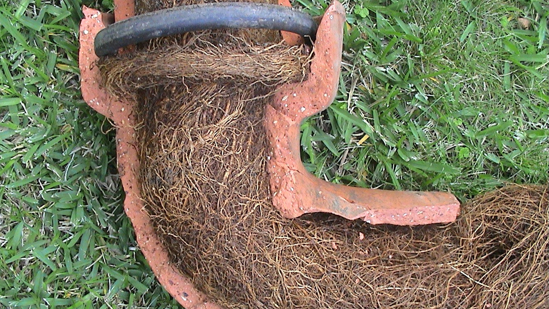 Tree roots blocking a pipe