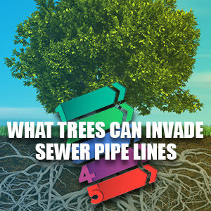 What Kind of Trees Can Invade Sewer Pipe Lines?