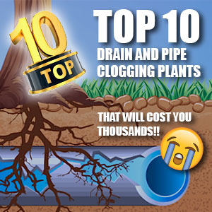 10 Drain Clogging Plants that Will Cost You Thousands