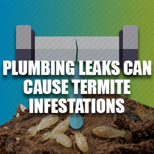 Plumbing Leaks Can Cause Termite Infestations