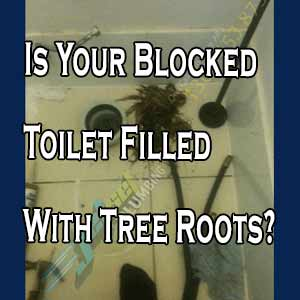 Is Your Blocked Toilet Filled With Tree Roots?