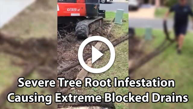 Tree Root Infestation - Blocked Drain video